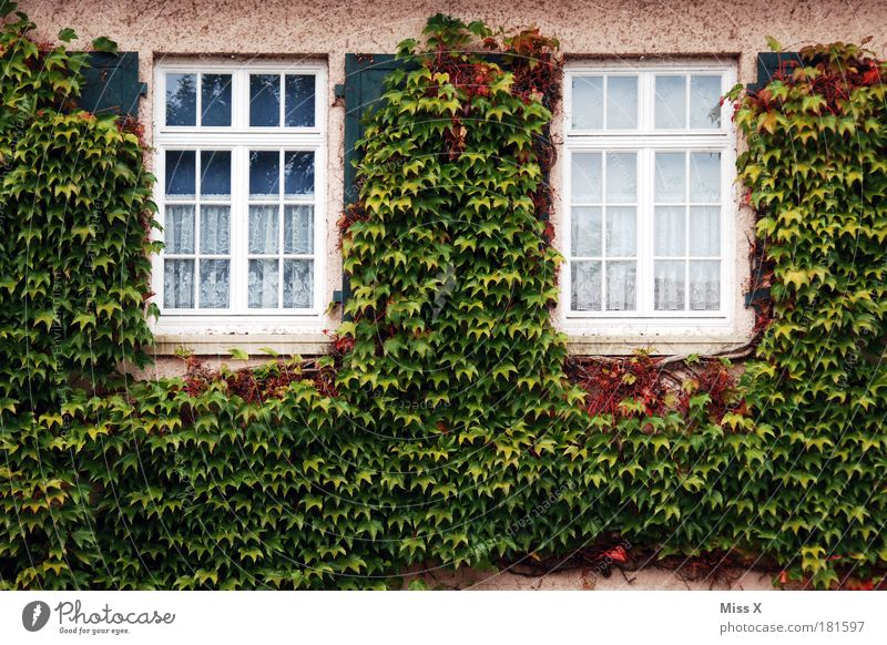 Nature Old Plant Summer Leaf House (Residential Structure) Autumn Cold Window Wall (building) Garden Building Wall (barrier) Park Facade Wild