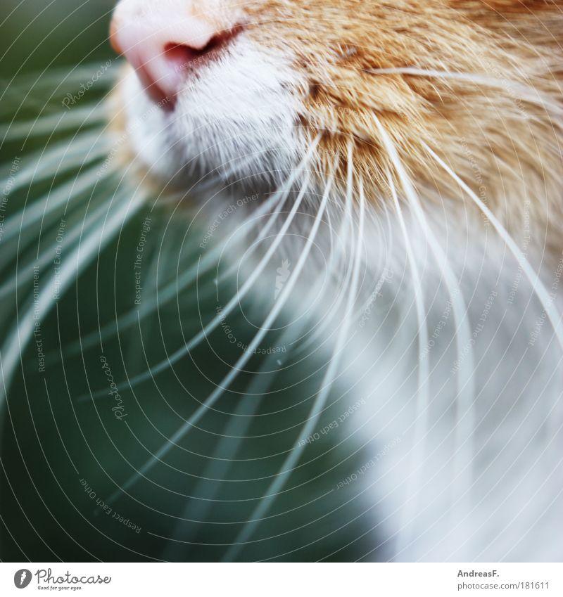 Nature Animal Cat Pelt Touch Facial hair Odor Pet Cuddly Meaning Whisker Beard hair Purr Sense of touch Moustache hair