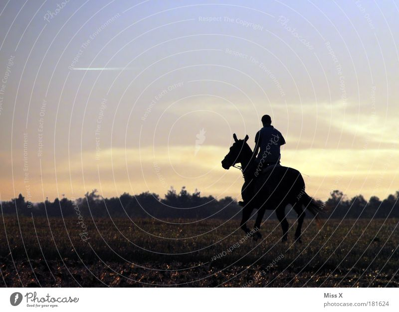 Human being Sky Animal Far-off places Freedom Happy Power Masculine Horse Happiness Leisure and hobbies Beautiful weather Nature Endurance Ride