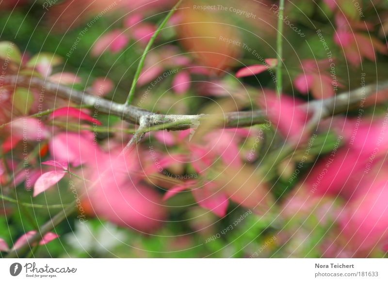 Nature Beautiful Tree Red Plant Leaf Environment Landscape Autumn Happy Dream Park Moody Pink Crazy Happiness