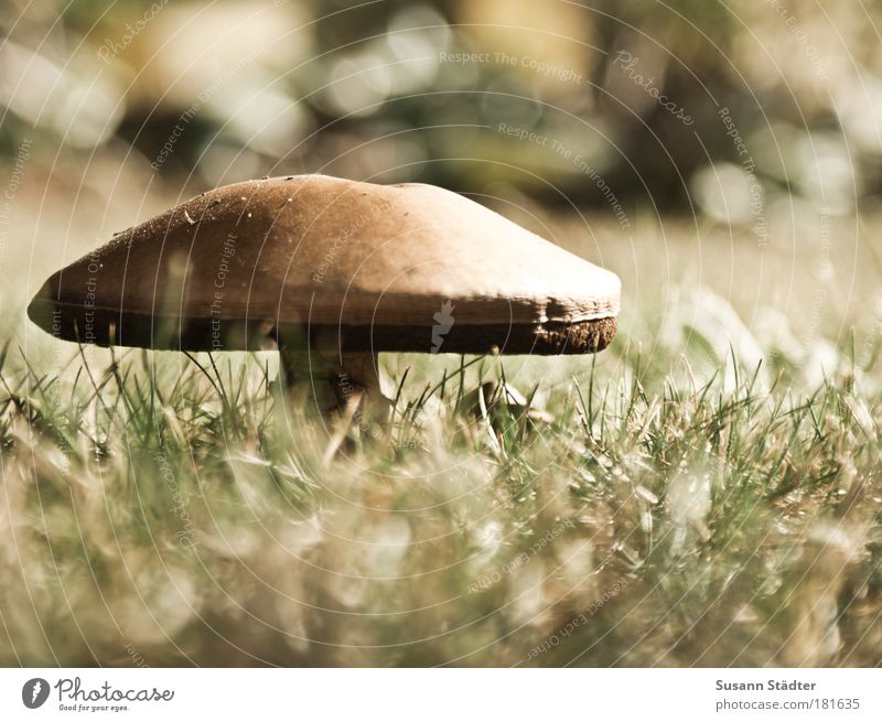 Mushroom time begins again Subdued colour Exterior shot Detail Deserted Copy Space right Light Shadow Sunlight Vegetable Organic produce Landscape Earth Park