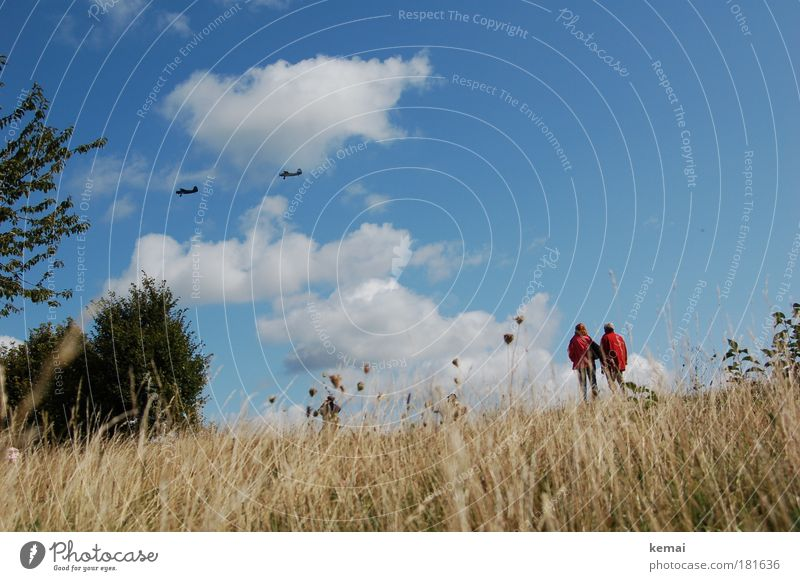 air show Trip Air show Nature Landscape Plant Sky Clouds Summer Beautiful weather Grass Bushes Aviation Airplane Propeller aircraft Observe Flying Looking Above