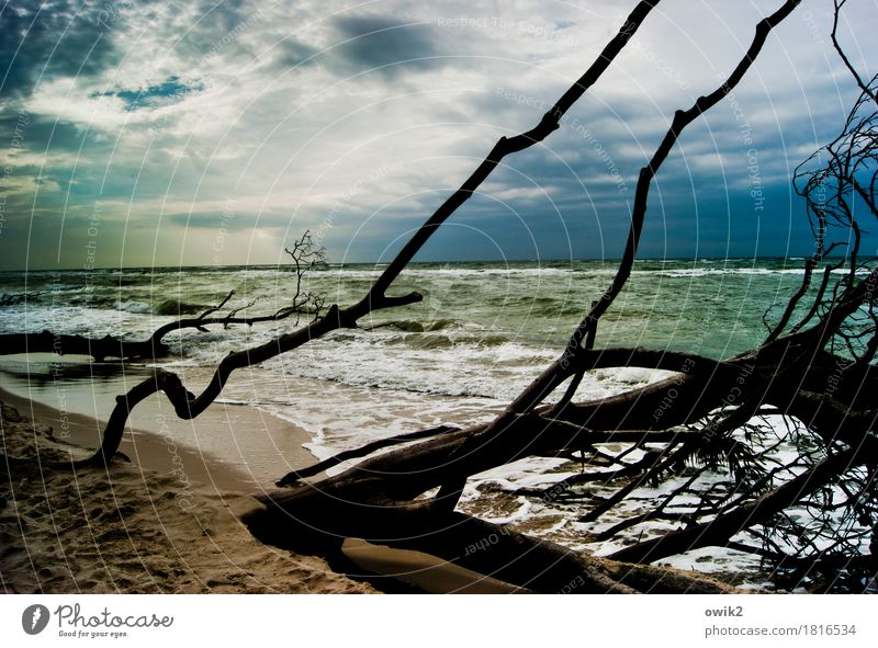 storm damages Vacation & Travel Tourism Environment Nature Landscape Plant Water Sky Clouds Horizon Climate Beautiful weather Wind Tree Wild plant Branch Waves