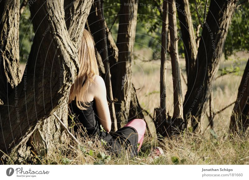 young woman sitting in top on tree in sun rear view Colour photo Exterior shot Shadow Contrast Sunlight Rear view Looking away Human being Feminine Young woman