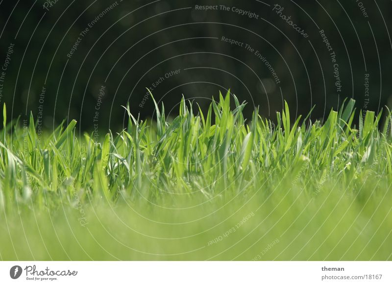 Green Grass Garden Lawn Blade of grass