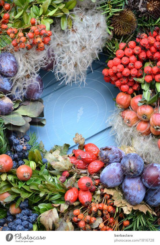 autumn fruits Fruit Living or residing Decoration Plant Autumn Climate Leaf Agricultural crop Berries Door Wreath Fresh Multicoloured Joy Colour Nature