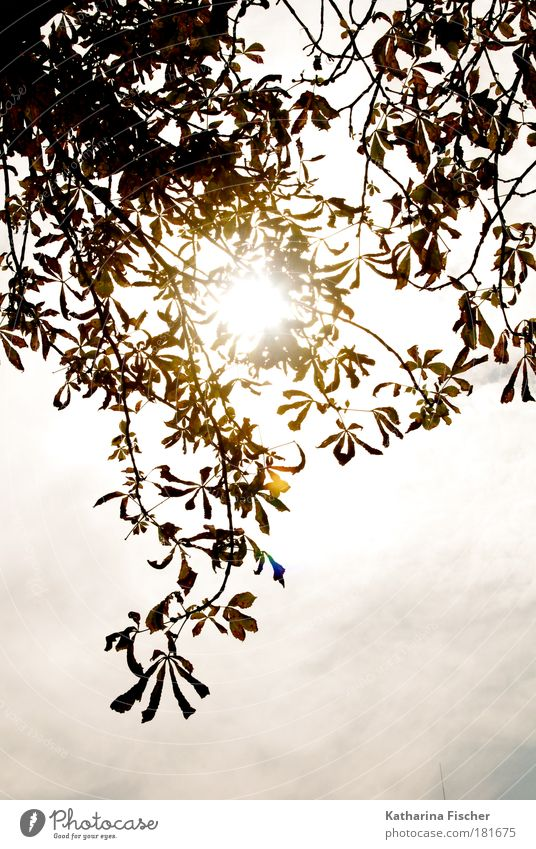 Nature Sky White Sun Green Leaf Autumn Warmth Brown Hope Branch Visual spectacle Shaft of light Leaf canopy
