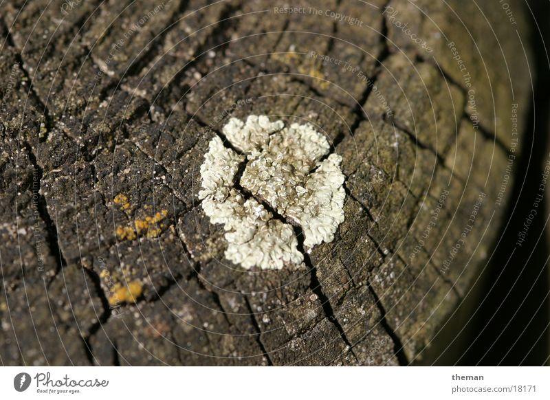 spoilage Wood palisade Mushroom