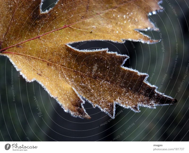 chill Colour photo Exterior shot Close-up Deserted Morning Light Shadow Plant Elements Sunlight Autumn Winter Ice Frost Leaf Park Old Freeze Glittering Esthetic