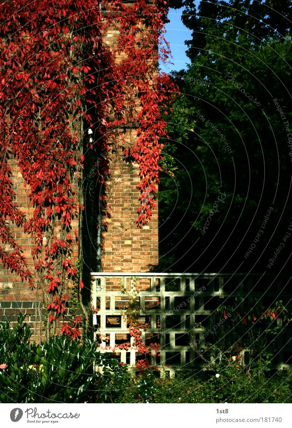 White Green Beautiful Plant Red Black House (Residential Structure) Autumn Wall (building) Architecture Building Wall (barrier) Park Brown Germany Facade