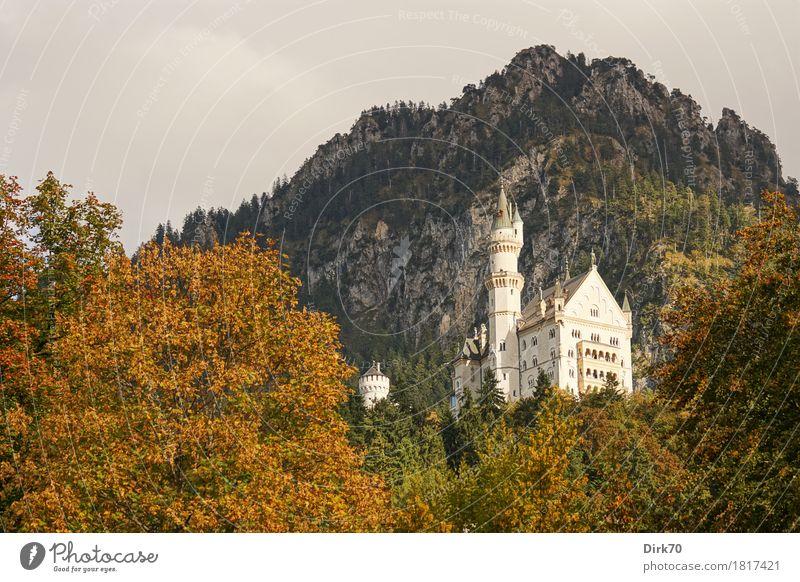 Neuschwanstein autumn I Vacation & Travel Tourism Sightseeing Mountain Culture Landscape Sun Sunlight Autumn Beautiful weather Tree Automn wood Forest Rock Alps