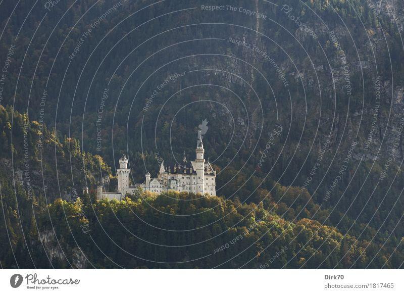 Neuschwanstein autumnal, from afar Luxury Elegant Style Design Tourism Sightseeing Nature Landscape Beautiful weather Forest Hill Alps Mountain Allgäu Alps
