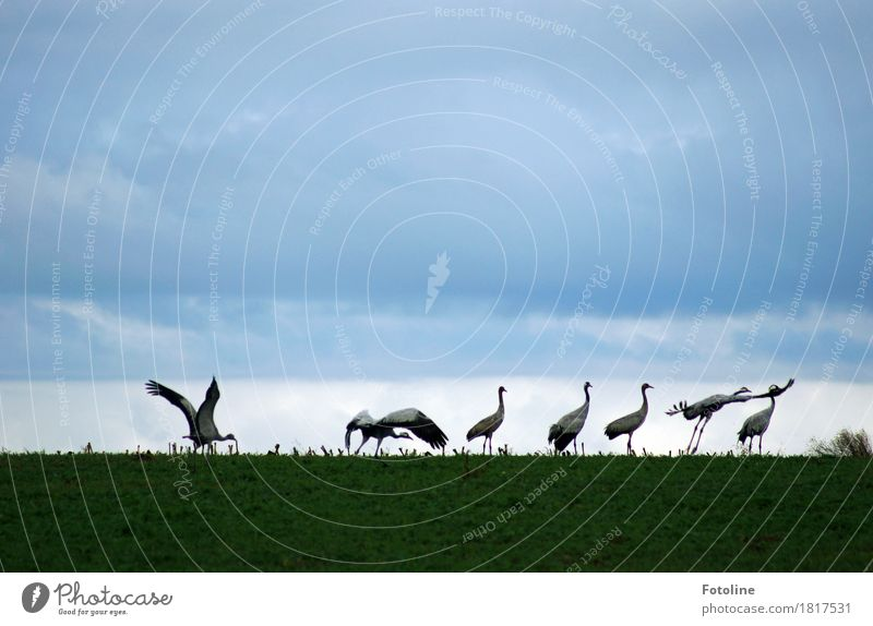 permission to start granted Environment Nature Plant Animal Sky Clouds Grass Field Wild animal Bird Wing Group of animals Flock Esthetic Free Natural Gray Green