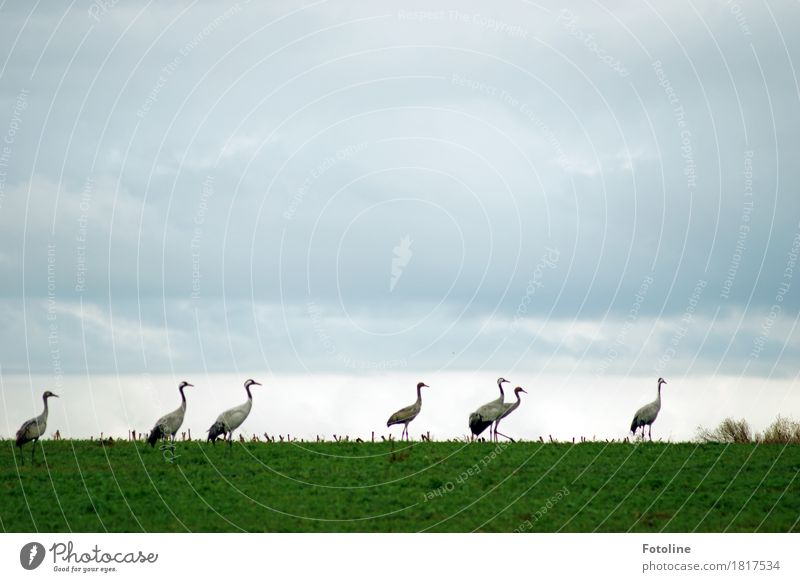 demonstration Environment Nature Landscape Plant Animal Sky Clouds Horizon Autumn Grass Field Wild animal Bird Group of animals Flock Esthetic Far-off places