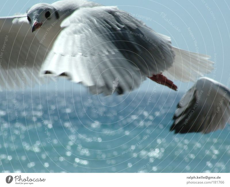 seagull Colour photo Exterior shot Close-up Deserted Copy Space bottom Day Motion blur Central perspective Animal portrait Looking into the camera Wild animal