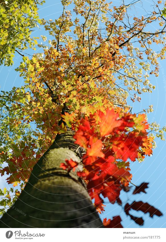 Sky Nature Tree Red Leaf Yellow Autumn Park Gold Design Illuminate Change Beautiful weather Transience Joie de vivre (Vitality) Autumn leaves