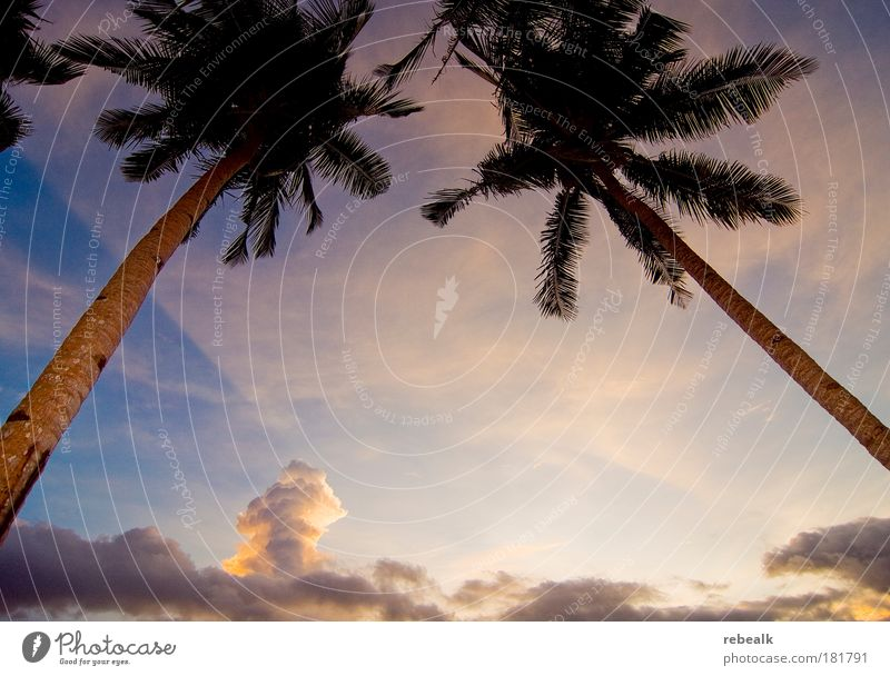 2 palm trees Colour photo Exterior shot Copy Space middle Evening Twilight Shadow Contrast Light (Natural Phenomenon) Sunrise Sunset Worm's-eye view Wide angle