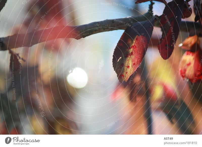 autumn Colour photo Multicoloured Exterior shot Deserted Day Sunlight Deep depth of field Nature Plant Autumn Tree Leaf Foliage plant Natural Red