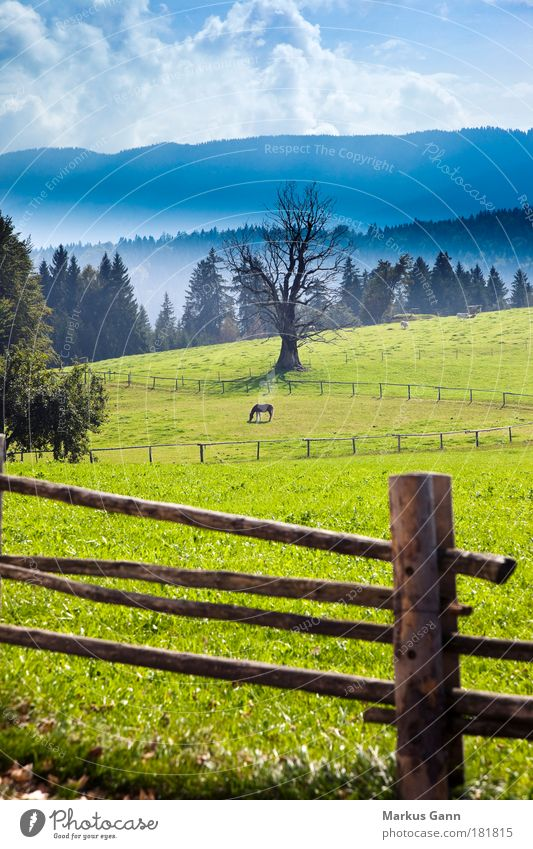 Nature Tree Green Clouds Loneliness Animal Far-off places Colour Forest Autumn Meadow Mountain Fog Horse Cow To enjoy