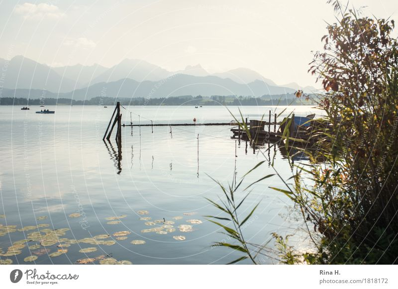 silent Leisure and hobbies Vacation & Travel Nature Landscape Autumn Beautiful weather Bushes Mountain Lake Natural Calm Relaxation Contentment Lake Forggensee