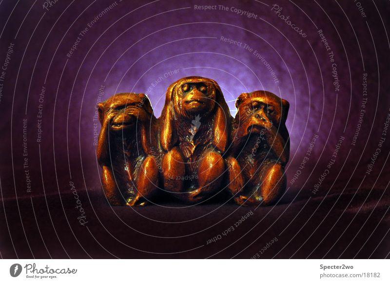 Animal To talk Listening Obscure Symbols and metaphors Senses Monkeys