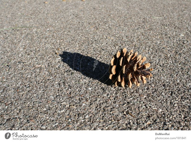 Nature Plant Black Loneliness Street Gray Lanes & trails Warmth Environment Gloomy Simple Lie Culture Asphalt Transience Natural