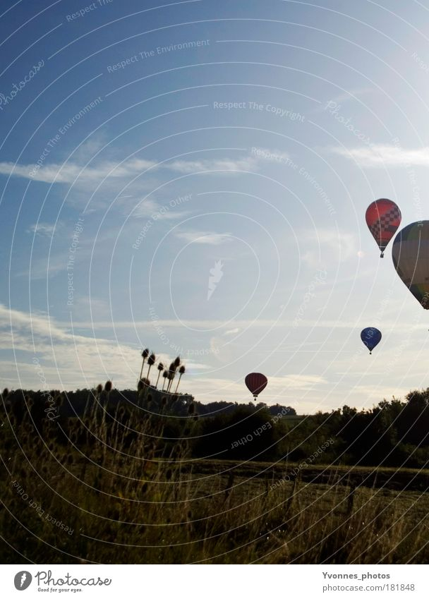 Sky Summer Clouds Calm Meadow Freedom Air Moody Leisure and hobbies Tall Trip Round Event Hot Air Balloon Events