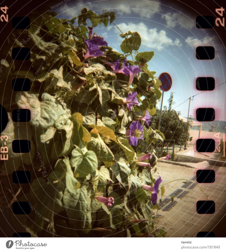 Sky Water Beautiful Plant Summer Beach Ocean Clouds Leaf Blossom Warmth Happiness Wild Violet Lomography Fragrance