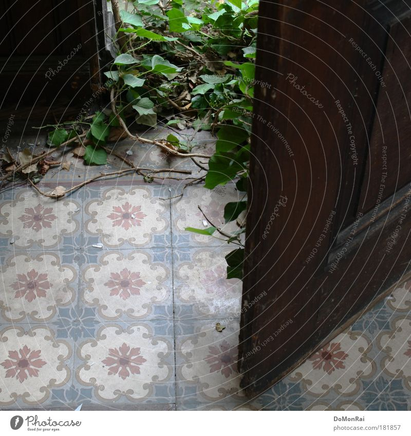 Nature Green Plant Leaf Wood Door Growth Retro Open Culture Living or residing Natural Tile Gate Entrance Society