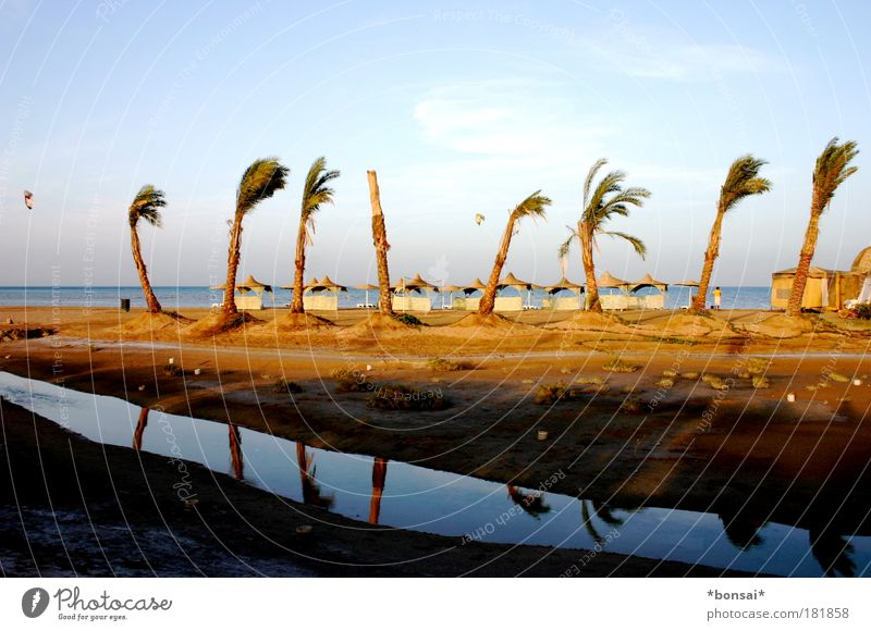 wind from left Vacation & Travel Summer Summer vacation Sun Beach Ocean Kiting Landscape Sky Horizon Beautiful weather Wind Palm tree Coast Relaxation Blue