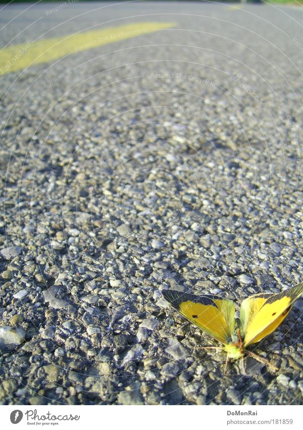 Nature Loneliness Animal Yellow Street Colour Death Gray Sadness Environment Flying Lie Wing Culture Asphalt Insect