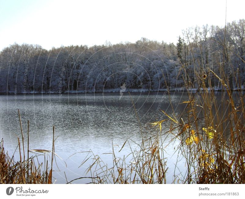 Nature Plant Landscape Winter Forest Cold Gray Lake Ice Weather Climate Bushes Change Frost Lakeside Seasons