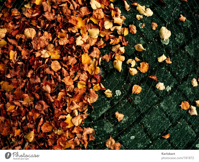 Nature Old Leaf Autumn Movement Stone Sadness Lanes & trails Line Design Environment Lifestyle Places Ground Change