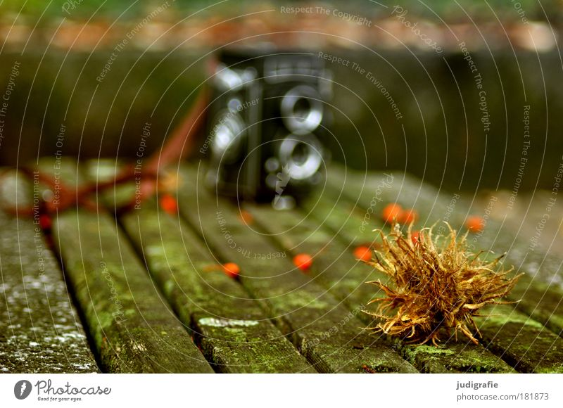 autumn Colour photo Exterior shot Day Blur Shallow depth of field Nature Autumn Park Thorny Berries Rawanberry Bench Wood Camera binocular Take a photo