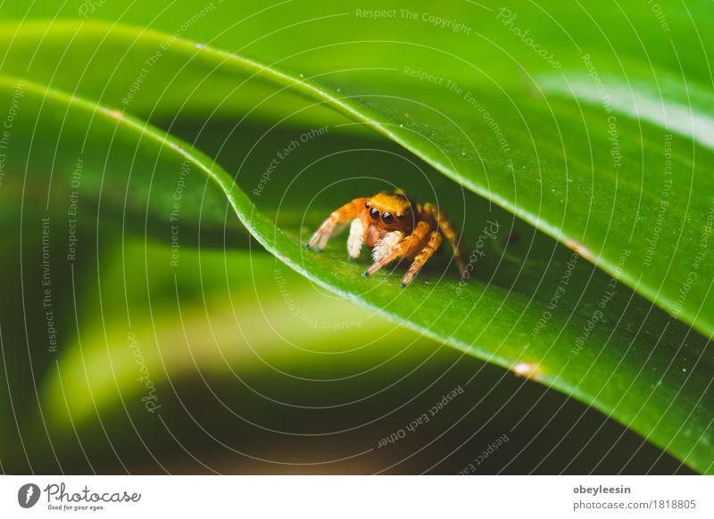 spider on a leaf, vintage colours and selective focus Art Animal Wild animal Spider 1 Adventure Colour photo Multicoloured Close-up Detail