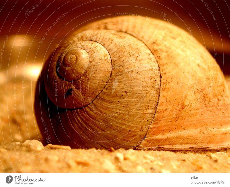 snail Snail shell Sand