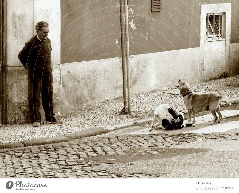 Man Portugal Lisbon