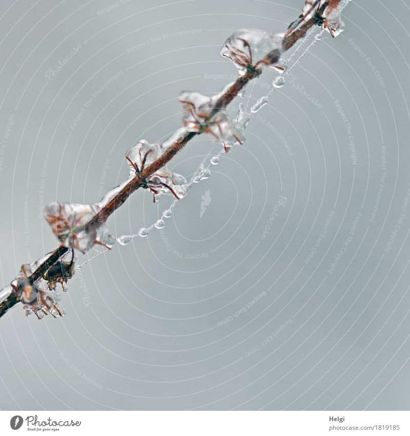 ice pearls Environment Nature Plant Winter Ice Frost Wild plant Stalk Field To hold on Freeze Hang Esthetic Exceptional Cold Small Natural Brown Gray White