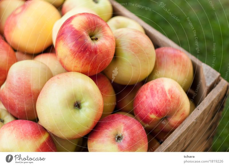 Apples Fruit Summer Garden Autumn Grass Wood Old Fresh Natural Juicy Yellow Red Crate box ripe food healthy Organic crates Produce background light Crops Farm
