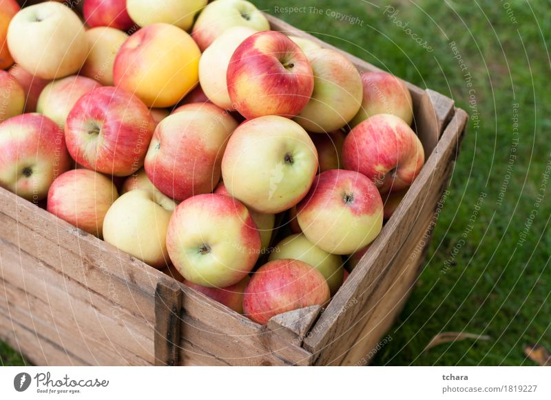 Apples Diet Summer Garden Autumn Grass Wood Old Fresh Natural Brown Yellow Green Red Crate box ripe food healthy Organic crates Produce Crops Farm Harvest