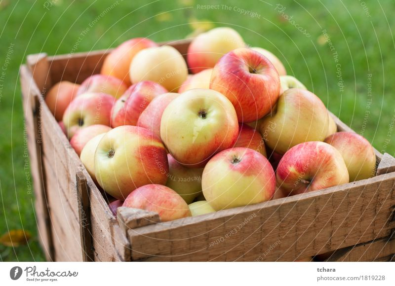Apples Diet Summer Garden Autumn Grass Wood Old Fresh Natural Yellow Red Crate box ripe food healthy Organic Produce background Crops Farm Harvest agriculture