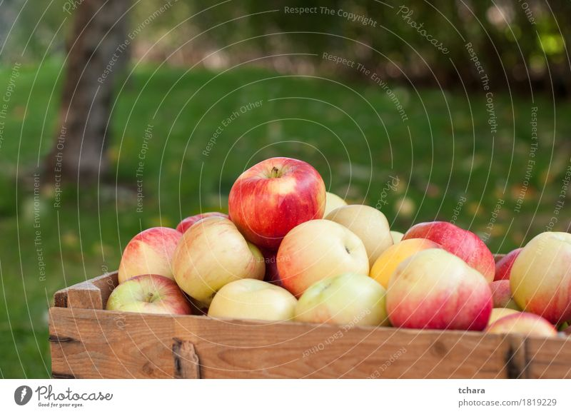 Apples Diet Summer Garden Autumn Grass Wood Old Fresh Natural Brown Yellow Green Red Crate ripe food healthy Organic crates Produce background Crops Farm