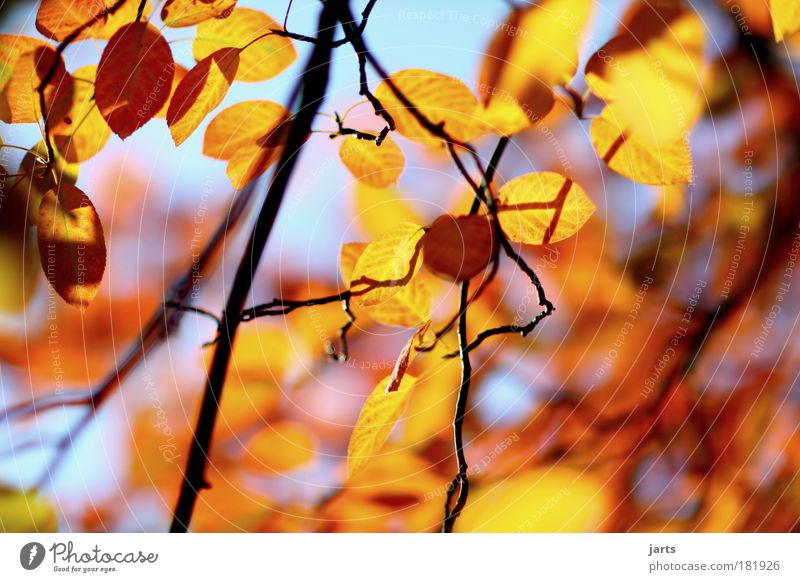 Nature Beautiful Tree Plant Colour Leaf Calm Environment Autumn Wood Park Natural Idyll Beautiful weather Serene Deserted
