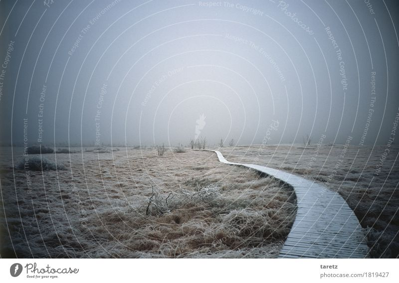 Wooden path in the raised bog with hoarfrost in fog in winter Hiking Environment Nature Landscape Winter Fog Grass Bushes Going Creepy Cold Hope Longing