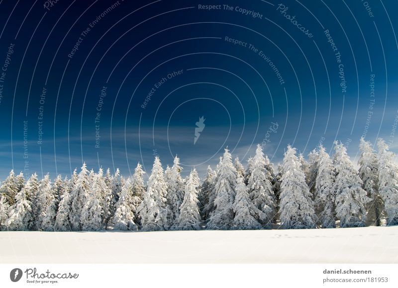 Snow line 400 meters Copy Space top Copy Space middle Sunlight Wide angle Sky Cloudless sky Winter Beautiful weather Ice Frost Tree Forest Cold Clean Blue White