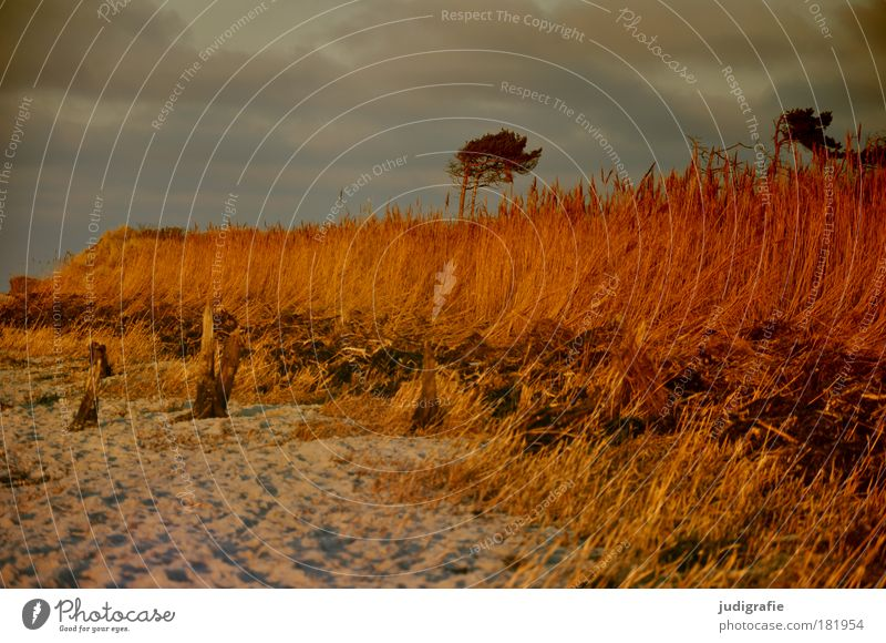 western beach Colour photo Exterior shot Deserted Day Evening Sunlight Environment Nature Landscape Plant Sand Sky Clouds Sunrise Sunset Climate Tree Grass