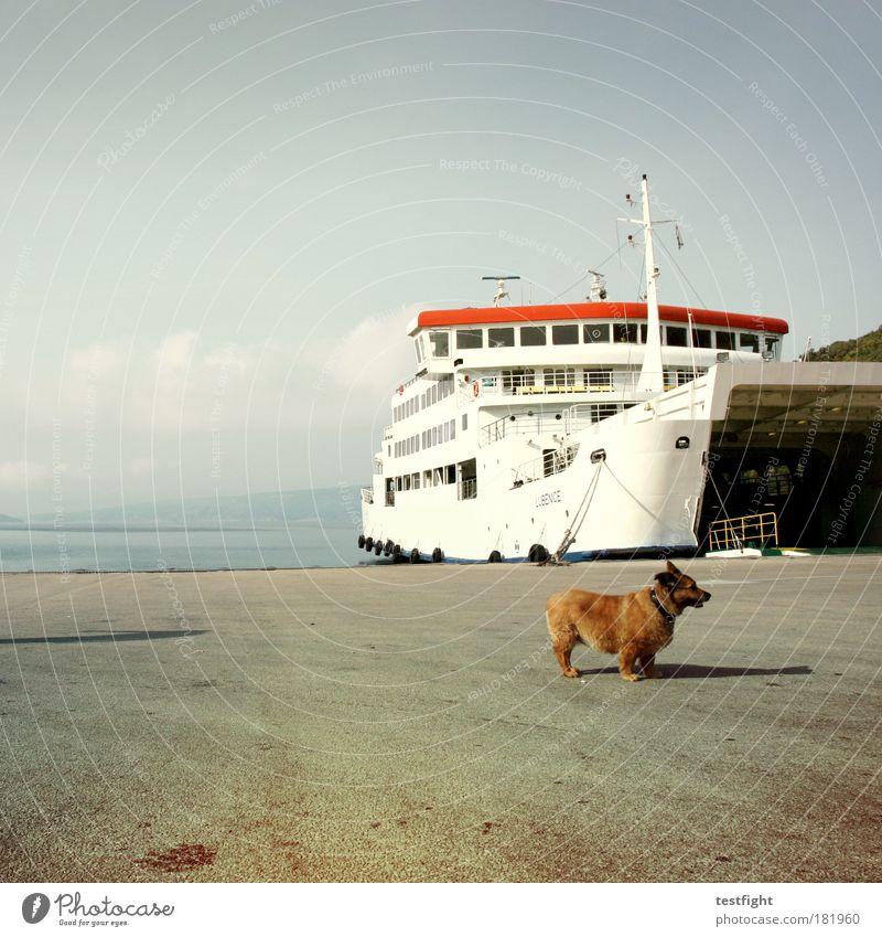 Nature Summer Vacation & Travel Ocean Far-off places Watercraft Animal Landscape Environment Dog Wait Trip Tourism Harbour Europe Pet