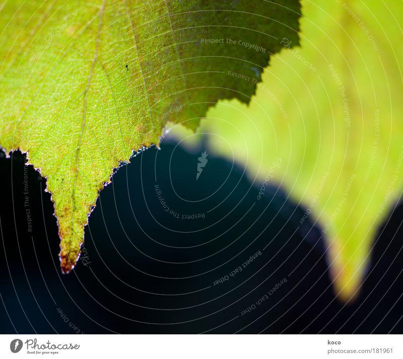 Nature Green Tree Plant Summer Leaf Black Autumn Transience Symmetry Foliage plant