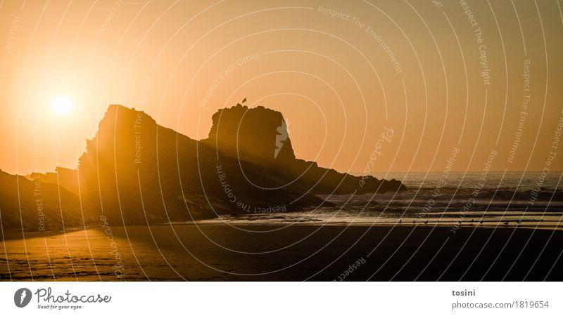 Nature Vacation & Travel Beautiful Water Sun Ocean Relaxation Beach Lighting Sand Waves Gold Longing Tracks Dusk Evening sun
