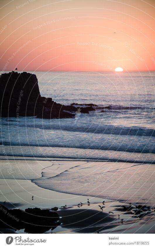 Sky Nature Vacation & Travel Water Sun Ocean Red Relaxation Beach Lighting Bird Sand Rock Horizon Waves Longing